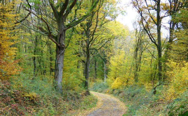 Balade en forêt de Chœurs-Bommiers